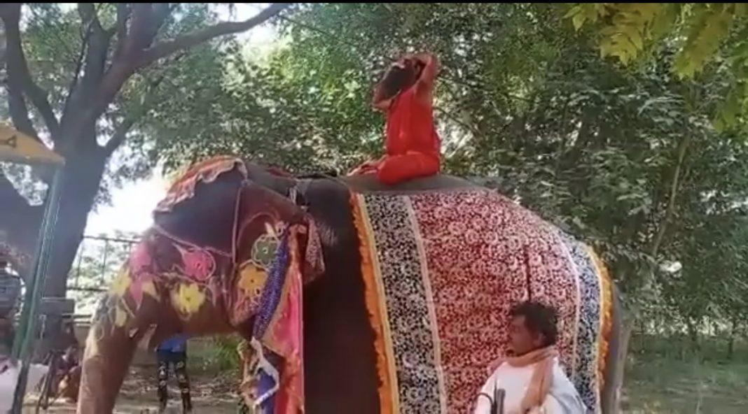 Baba Ramdevs yoga act on elephant