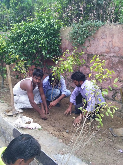 tree-plantation-by-Delhi-government