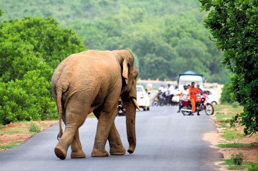 animals-crossing-road