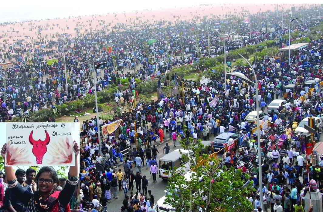 Protestors at Marina Beach, Chennai, demanding that the ban on jallikattu be lifted. Photos: UNI