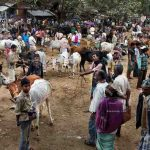 SC issues notice to Centre on cattle trade ban