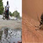 Delhi sees sharp rise in malaria, chikungunya cases