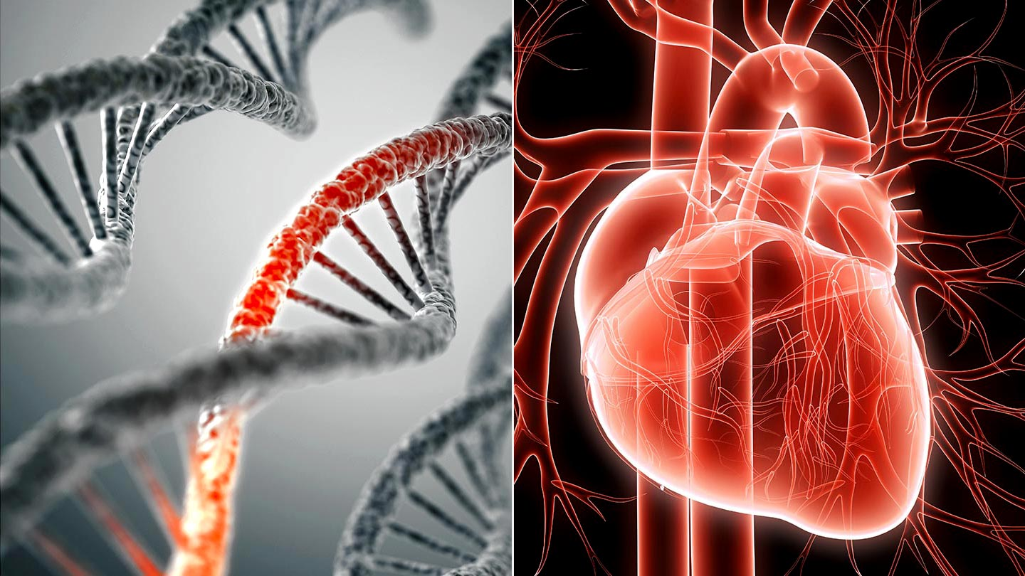 Study identifies genetic link to heart disease in Indian population