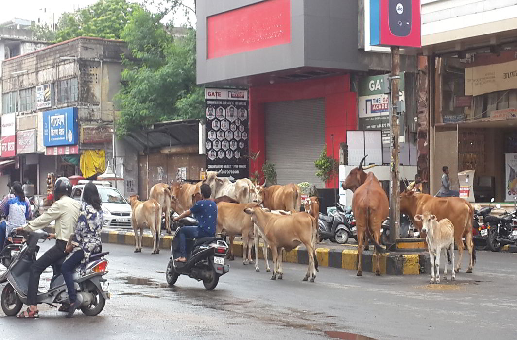 After feedback from states, Centre has a rethink on cattle trade ban rule