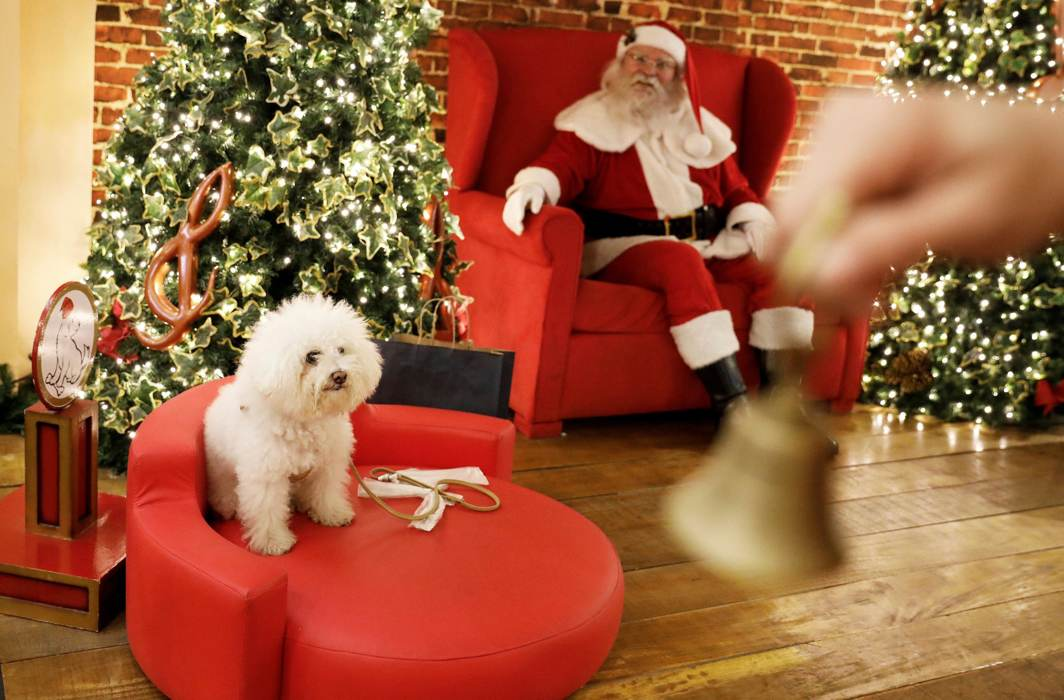 TOYS ARE US: A dog sits on a sofa next to a man dressed as Santa Claus while its owner (not pictured) takes a picture of it inside Villa-Lobos shopping mall in Sao Paulo, Brazil, Reuters/UNI