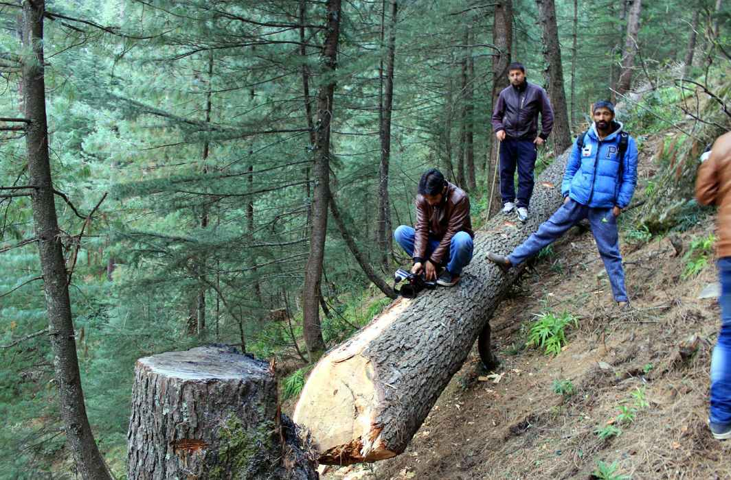 GREEN TRAGEDY: A team of mediapersons along with environment activists showing illegally chopped green cedar and pine trees at forest block Dandi in Neeru range of Jammu & Kashmir's Bhaderwah forest division, UNI