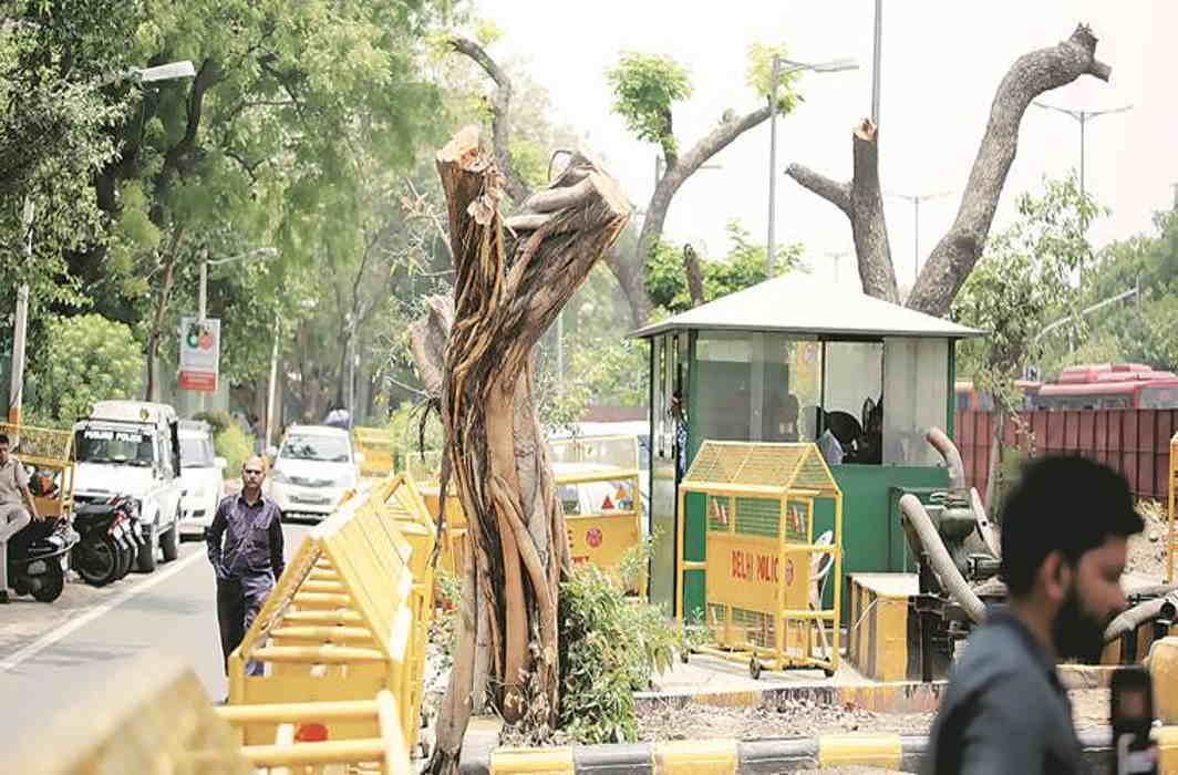 No more Delhi trees to be cut till July 4, says High Court