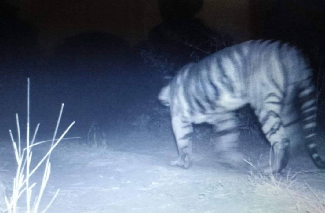 Gujarat forest department spotted a tiger after 3 decades