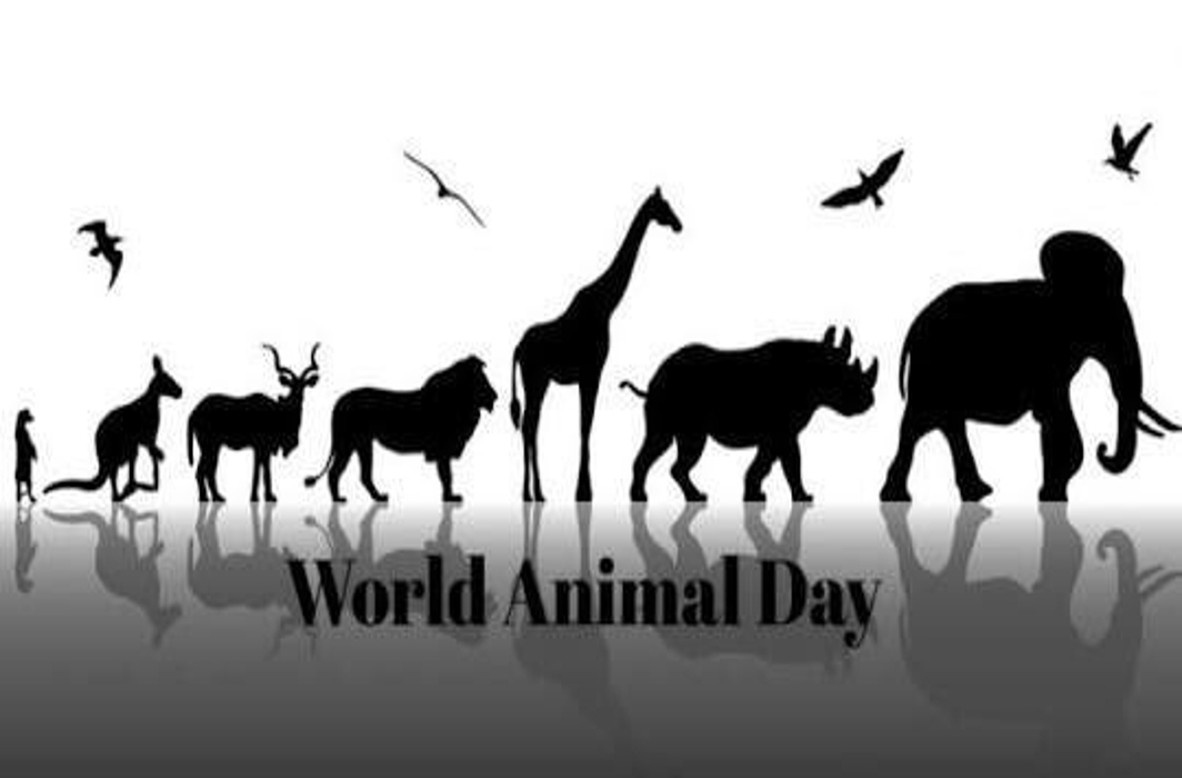 World Animal Day 2019