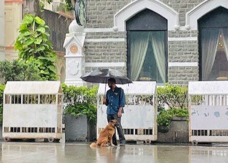 man sharing his umbrella with a stray dog