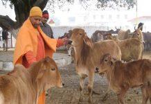 CM Adityanath Yogi reached Aparna Yadav Gaushala