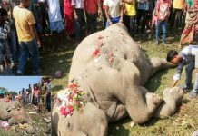 Elephant killed in train accident, people felicitated by flower