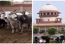 SC asked to Center for animal purchase-sale notification report in 2 weeks