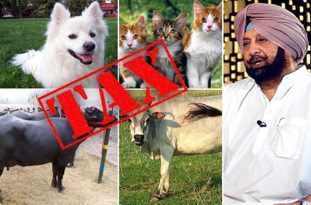 tax can be applyed on pet animals by Punjab government