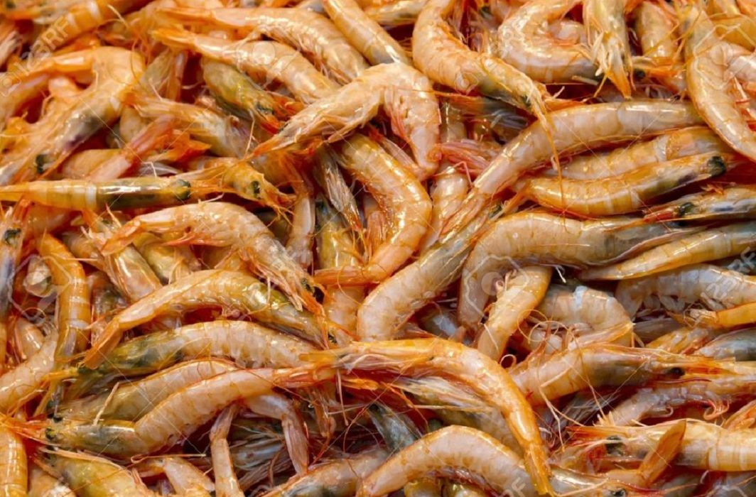 fatwas issued on eating lobster fish