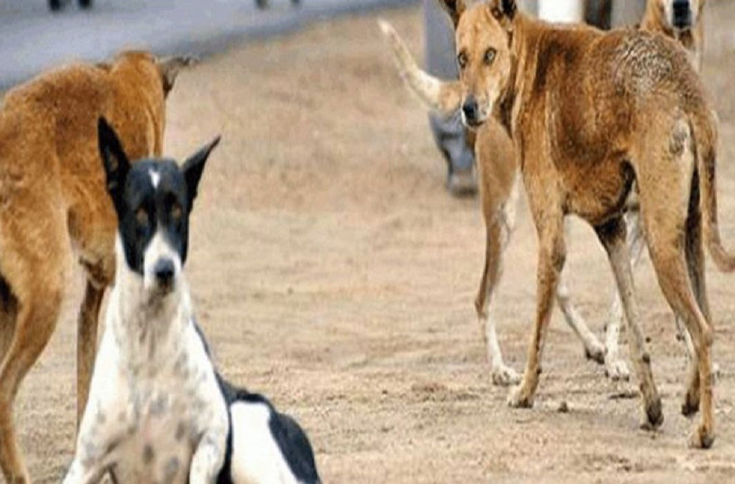 Dogs encounter in UP, monitoring of drones in Sitapur