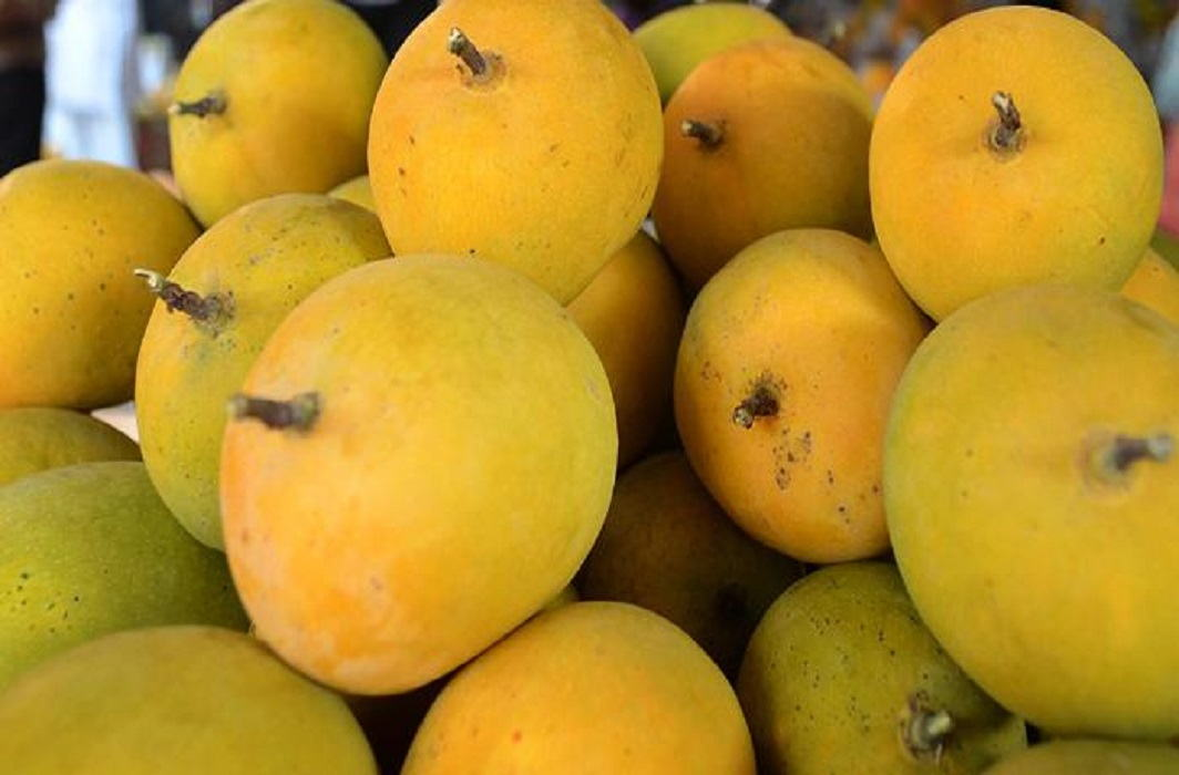Mango festival will be organise On 23 and 24 June For display of mango