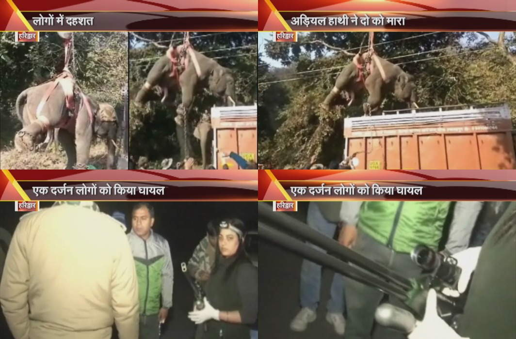 Haridwar: Pradik Elephant killed two, injured a dozen people