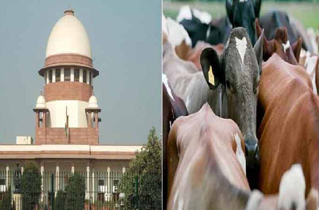 Supreme court said central government will make a law for Violence related to cow protection