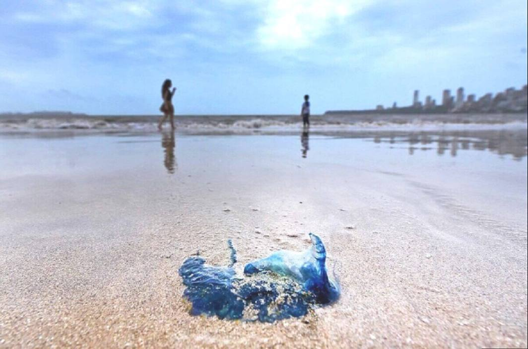 Terror of jellyfish spread over Mumbai Beach Government warns to stay away