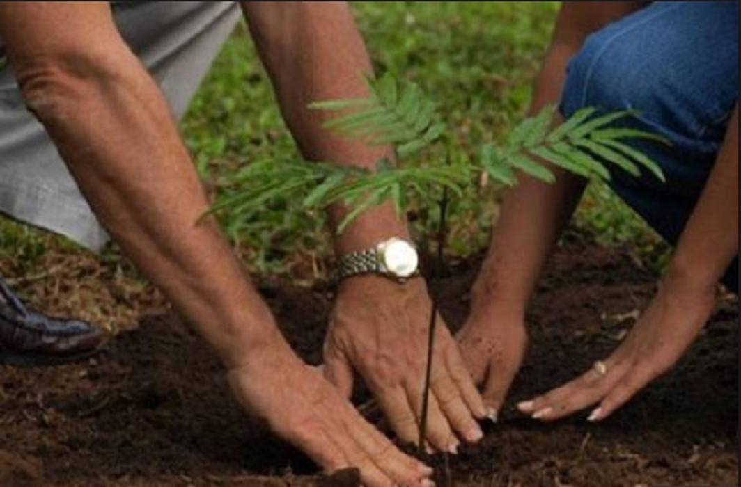 UPEIDA has Planting 25 thousand plants on 72nd Independence Day