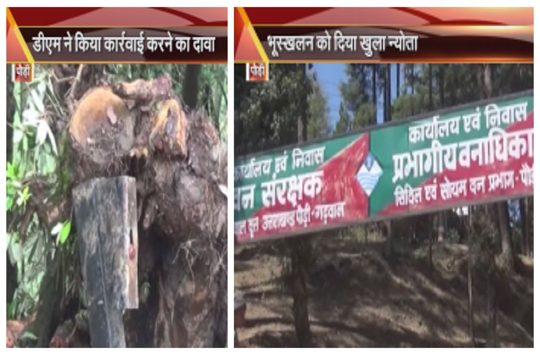 PWD cutting tree in the name of road