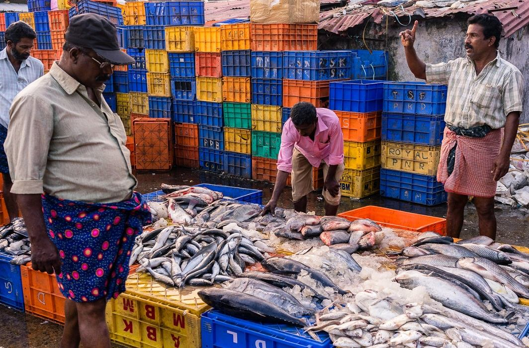 Fish from Andhra and Kerala has causes of cancer.