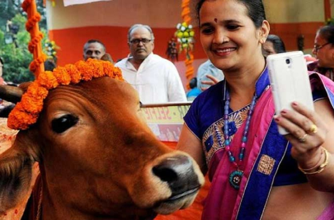 Selfie with Cow contest