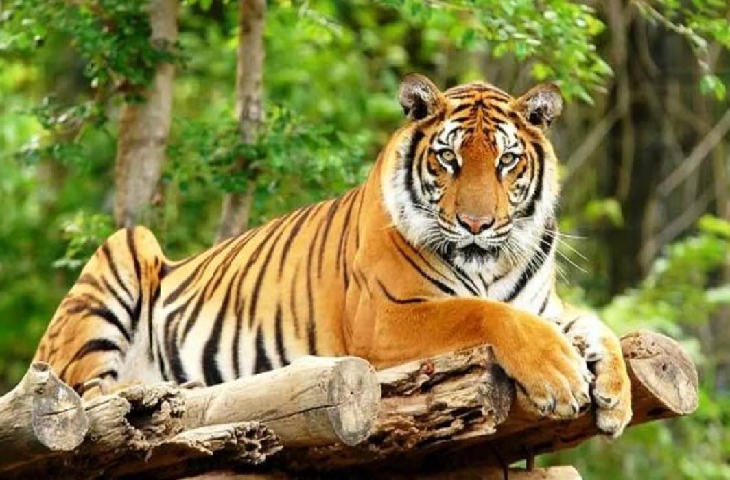 Tiger State