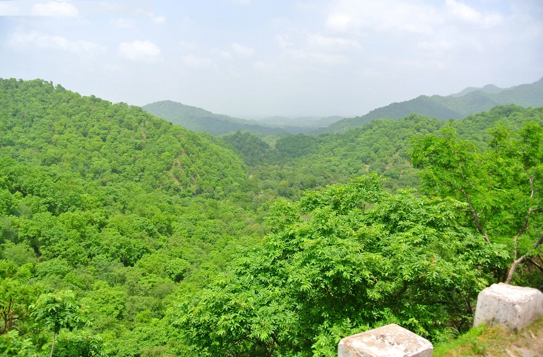 Green Wall of India