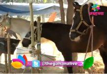 The historic Dadri fair of Ballia begins